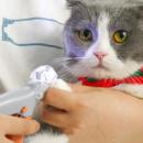 Когтерезка для кошек и мелких собак с подсветкой