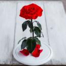 Стабилизированная роза в колбе Lerosh - Lux 33 см, раскрытая Красная (на белой подставке)