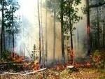 Расчистка лесных массивов на взаимовыгодных условиях