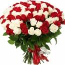 101 червона і біла троянда (70 см)