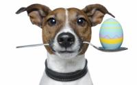 Кастрация собаки