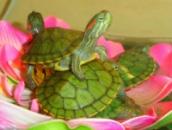 рептилии и другие обитатели аквариумов
