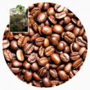 Coffee Arabica «TRIANGOLO BRAZIL»