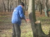 Валка деревьев в Донецке и области