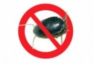 Уничтожение тараканов в ресторанах и кафе, дезинсекция