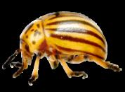 Инсектициды (от Колорада)