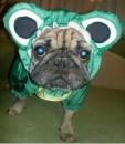 Курточка «Жаба», на весну-осень, с капюшоном.