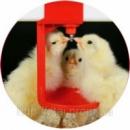 Поилки ниппельные для птицы (общая информация)