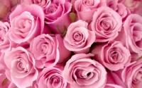 Троянди / Розы