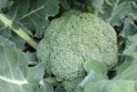 Масло семян брокколи нерафинированное Спивакъ
