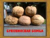 Грецкий орех Буковинская бомба(привитый)