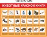Стенд «Животные красной книги»