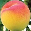 Персик «Вардени», саженец