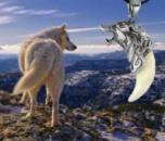 Оберег Амулет Кулон-клык волка