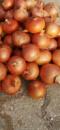 Семена лука Деподжу (Банко) F1 среднеранний, 250 000 семян (БТ Сид Турция)