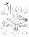Гуси, утки откорм 3% БМВД Фидлайн