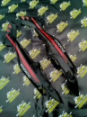 Б/у пластик задний Л+П боковина Viper F5