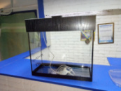 аквариум 23л с крышкой