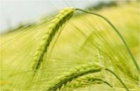 Консервант влажного зерна та кукурузы - Концерн ADDCON