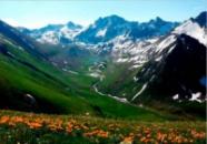 Фиточай Кавказский долгожитель