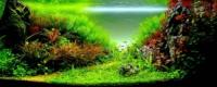 живые аквариумные растения