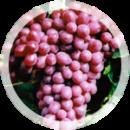 Столовый виноград «Шоколадный»