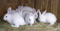 ТАРАЩАНСКИЙ комбикорм-концентрат для кролей, крольчат, кролематок УНИВЕРСАЛЬНЫЙ|escape:'html'