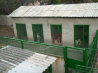 Перендержка собак, гостиница для собак.|escape:'html'