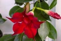 Интернет- Магазин  цветов и подарков  «ОАЗИС »
