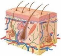 Книги по дерматологии и венерологии|escape:'html'