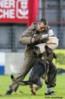 Бытовая и спортивная дрессировка собак различных пород|escape:'html'