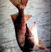 Интернет-магазин рыболовных товаров «MARKON-FISH»