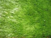 Искусственная трава, искусственные покрытия для ландшафтного дизайна|escape:'html'