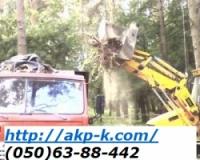 Корчевание деревьев, кронирование. 0506388442|escape:'html'