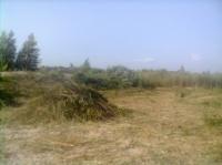 Покос травы, бурьяна. Покос камыша. Удаление растительности на участке.