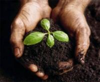 Биогумус — органическое удобрение, вермикомпост|escape:'html'