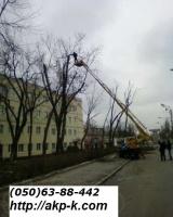Спил деревьев по частям 0506388442 escape:'html'