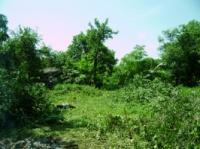 Уборка участка Киев. Очистка участков от деревьев, травы и мусора.
