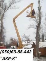 Удаление деревьев Киев, корчевание пней. 0506388442