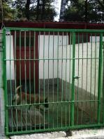 Утримання собак|escape:'html'