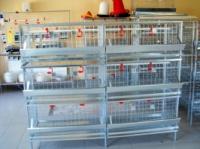Клетка для кур К 2-3|escape:'html'