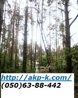 Аварийный спил деревьев 0506388442 , удаление аварийных деревьев Киев. Подрезка деревьев|escape:'html'