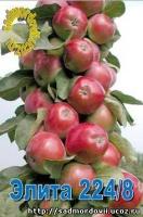 Саженец яблони колоновидной Элита 224/8|escape:'html'