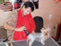 Стрижка собак любых пород и размеров в Херсоне.|escape:'html'