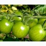 Продам зеленый помидор Опт|escape:'html'