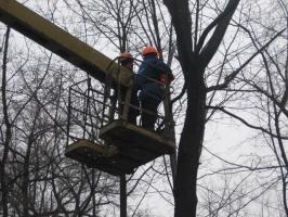 Обрезка деревьев Донецкая область