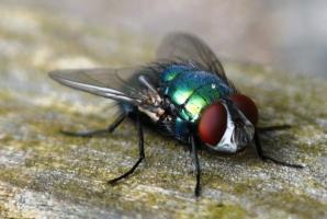 Уничтожение мух в Днепродзержинске