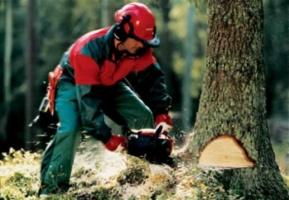 Обрезка и удаление деревьев