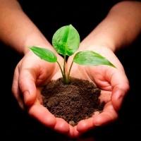 Професійні консультації з озеленення територій
