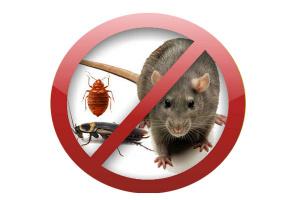 Уничтожаем крыс в Днепропетровске